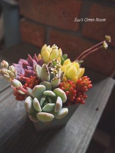 I love all this colours! 多肉Succulent小品