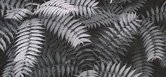 Ansel Adams   ARTPIL Imogen Cunningham, Edward Weston, Yosemite Valley, University Of Arizona, Environmentalist, Ansel Adams, Black N White Images, Sierra Nevada, Landscape Photographers