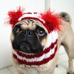 Dog Hat Candy Cane Hat The Original Pug Hat by jessicalynneart, $ 24.00