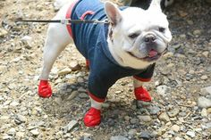 さあ、冒険に出かけよう。 愛犬とはじめてのキャンプ! - キャンプ - Funmee!![ファンミ―]