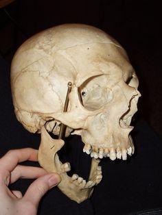 Skull 5 by Al-Dorn-Stock
