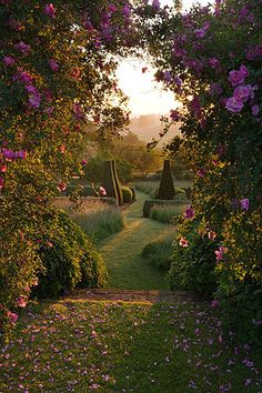 Pettifers, Oxfordshire: Dawn light hits the parterre framed by rose arbour