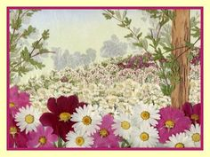 Pressed Flowers | LS012 Daisy/Cosmos Valley $350