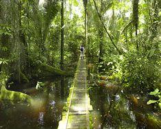 The Amazon http://www.ecuadorgalapagostravels.ec/index.php?pagina=amztours