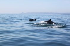 The Ultimate Jersey Adventure!  Regular RIB boat trips, tours and charters around Jersey's magnificent coastline and offshore islands.  #Private #Charters for a bespoke experience – zip across to #France for #dinner or enjoying a #picnic on a sandbank miles from land, with just your friends and even the odd #dolphin for company!