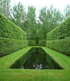 Canal of water with surrounding hedges