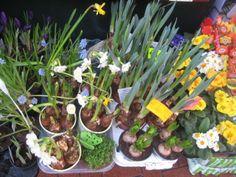 Spring in Hampstead in London. Visit www.virgin-atlantic.com