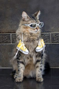 Cool cat !!
