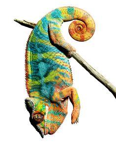 Chameleon by Mark Laita