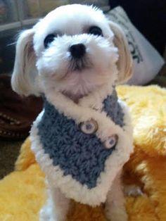 Perro pequeño de ganchillo bufanda perrito Chooes por QuiltNCrochet Gorras  Para Perros d0b55b84a23