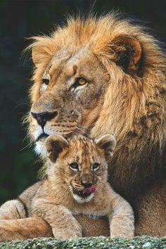 Pai e filhote!