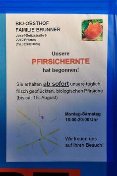 frischobsthof familie brunner Red Haven Bio Pfirsich  josef-seitzstraße 6 2242 prottes tel. +43 2282 4856 mobil +43 650 410 5529 (hubert brunner sen.) Lunch Time, Random, Fresh Fruit, Harvest, Fruit And Veg, Casual