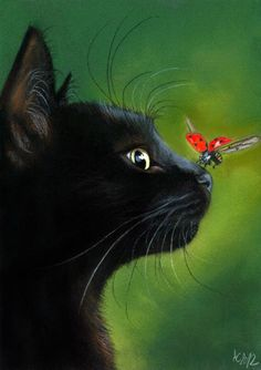 Black cat with a ladybug landing on it's nose.