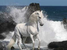 Stunning white horse at the edge of powerful surf