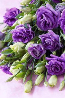 Flowers in green and purple