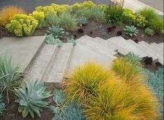 lime green and muted green grasses along walkway - jeffrey gordon smith plastolux modern landscaping