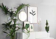 inredning till vardagsrum, växter, blad, kaktus och tavlor