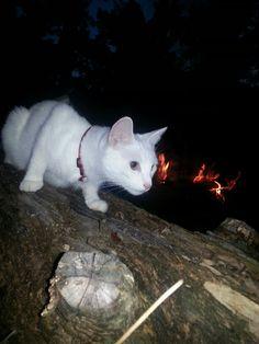 Explorer kitty