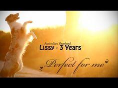 Perfect for me ♥ | Australian Shepherd Lissy (3 Years) - YouTube
