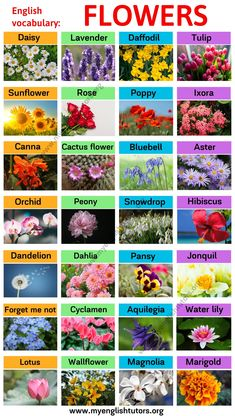Types of Flowers! In this section, you will find different flower names in English with the picture. Learn those words will help you broaden your English vocabu Flowers Name In English, Flowers Name List, Flower Names, Beautiful Gardens, Beautiful Flowers, Flower Chart, Different Types Of Flowers, Learn English Words, Types Of Photography