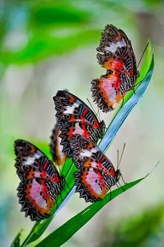 Butterflies.. would love this as a tattoo :)