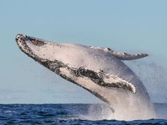 Whale watching in Sydney: How to get the perfect picture - pic: News Corp Australia