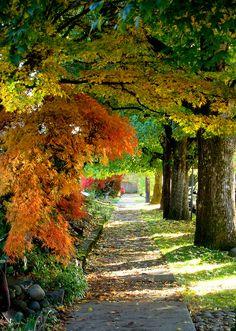 Dear Oregon forest, you make me feel like home. Corvallis, Oregon