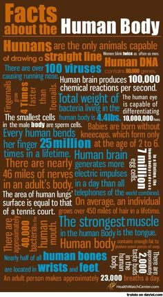 Health Infographics - The Human Body Infographic. All About The Human Body Facts. Interesting Facts About Human Body. Science Facts, Teaching Science, Teaching Ideas, Mad Science, Weird Science, Elementary Science, Weird Facts, Fun Facts, Random Facts
