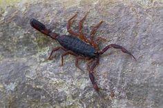 > Scorpion Hunt   John Koerner's Official Blog