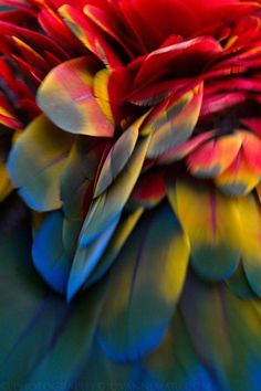 Feathers scarlet macaw (photo by giovanni mari) Patterns In Nature, Textures Patterns, Instalation Art, All Birds, Jolie Photo, World Of Color, Art Furniture, Natural World, Bird Feathers