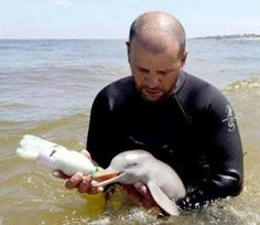 Feeding a baby dolphin
