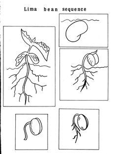 ciclo della pianta