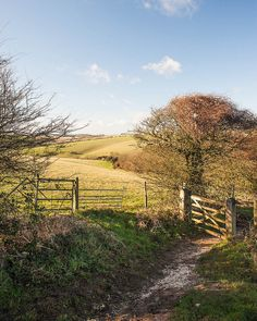 South Downs, near Brighton, East Sussex. The South Downs is a popular area for ramblers with a network of over 2,000 miles of easily accessible trails.