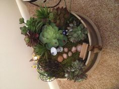 Gnome garden made with succulents by my mom.