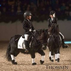 WHO PUT THESE FRIESIANS IN DRYYYER!