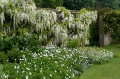 White garden at Barrington Court