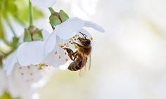 Bee Week 2013 : European week of bees and pollination at Gembloux Agro-Bio Tech.