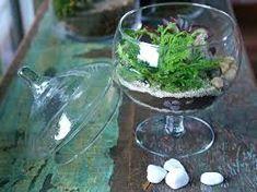 Os terrários são mini jardins feitos dentro de vidros ou vasos de cerâmica. Eles tão incríveis que podem ficar dentro de casa, mas é importante que o local