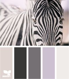 Black and White Color Palette with a lilac purple pop! This color scheme has endless options, like a palette contemporary or high design living room, or a sweet look or teen or little girl bedroom!
