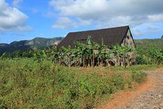 #cuba #vinales #mogote Cuba Vinales, Cuban, Vineyard, Country Roads, Memories, Outdoor, Havana, Memoirs, Outdoors