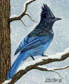 Stellar Jay In Winter Painting  - Stellar Jay In Winter Fine Art Print