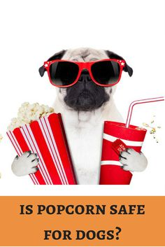 Movie nights are incomplete without popcorn. Shall we share some pupcorn to our pooch?  http://dogbabe.com/is-popcorn-bad-for-dogs/