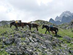 caballos porteando comida al Refugio Vegarredonda Remis en el Cornión @Picos_de_Europa