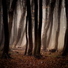 Amazing nature photos