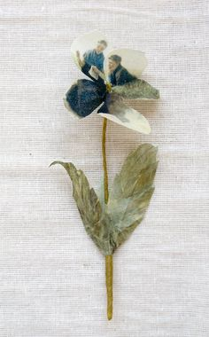 Art pansy printed with Rijksmuseum painting by Puur Anders