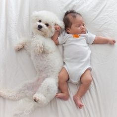 Top 5 Least Smelly Dog Breeds Breed Bichon Frise: Bichon Frise is a small sized dog breed native to France. Poodle, Puppy Love, I Love Dogs, Cutest Puppy, Cute Puppies, Cute Dogs, Bichon Dog, Havanese, Smelly Dog