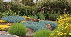 Attention to detail offers wonderful textures in your landscpe design