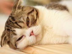 Bindehautentzündung bei Katzen: Symptome und Ursachen