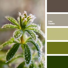 Color Palette #3101