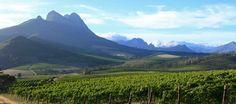 The beautiful Warwick Estate - Stellenbosch, South Africa www.bcfw.co.uk Meet The Team, South Africa, Vineyard, Mountains, Nature, Travel, Beautiful, Naturaleza, Viajes